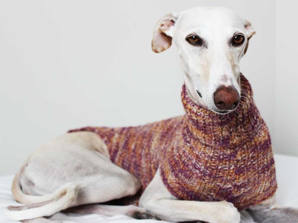 Jersey para perro de Lucas & Lola